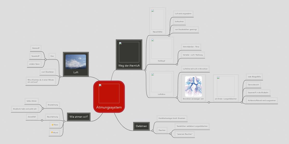 Atmungssystem (Beispiel) - MindMeister