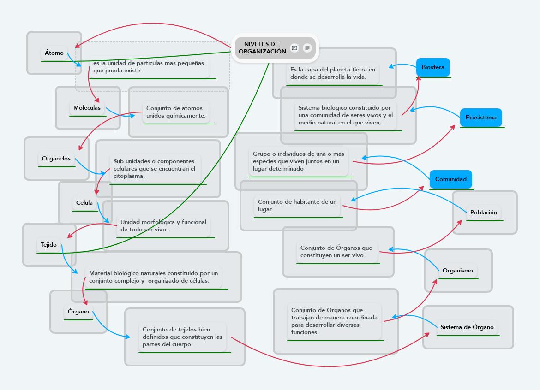 Biologico Niveles De Organizacion De Los Seres Vivos..