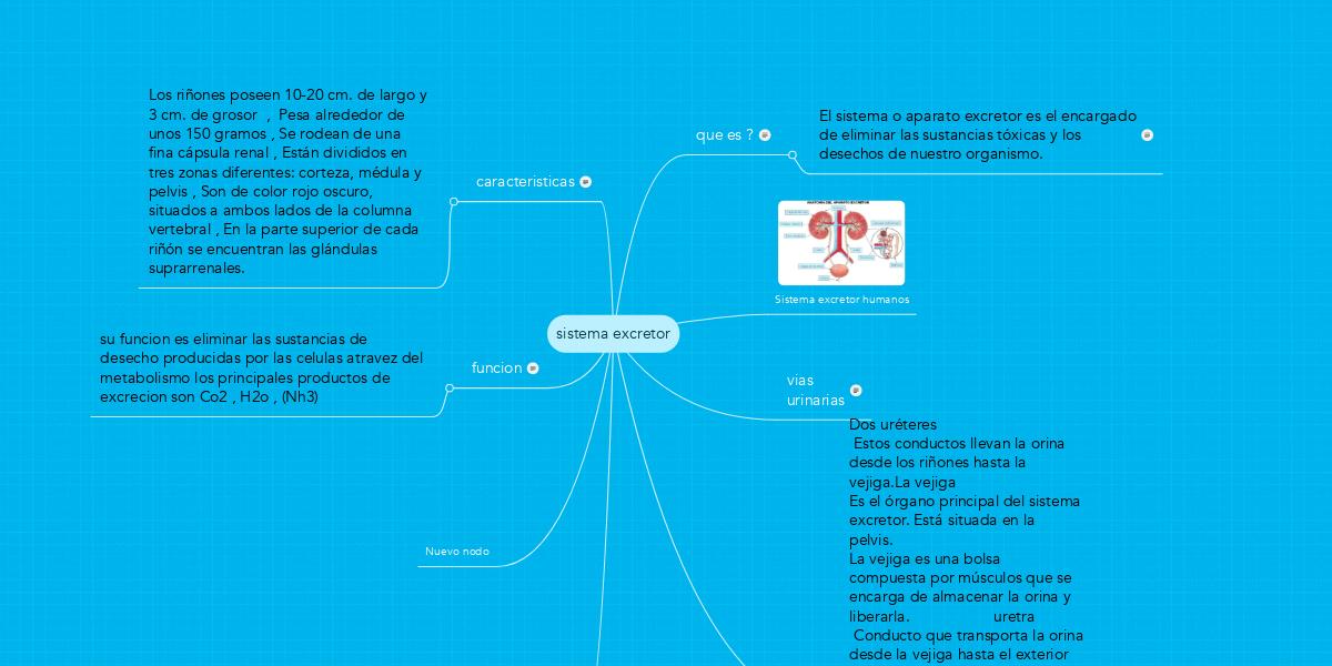 sistema excretor (Ejemplo) - MindMeister