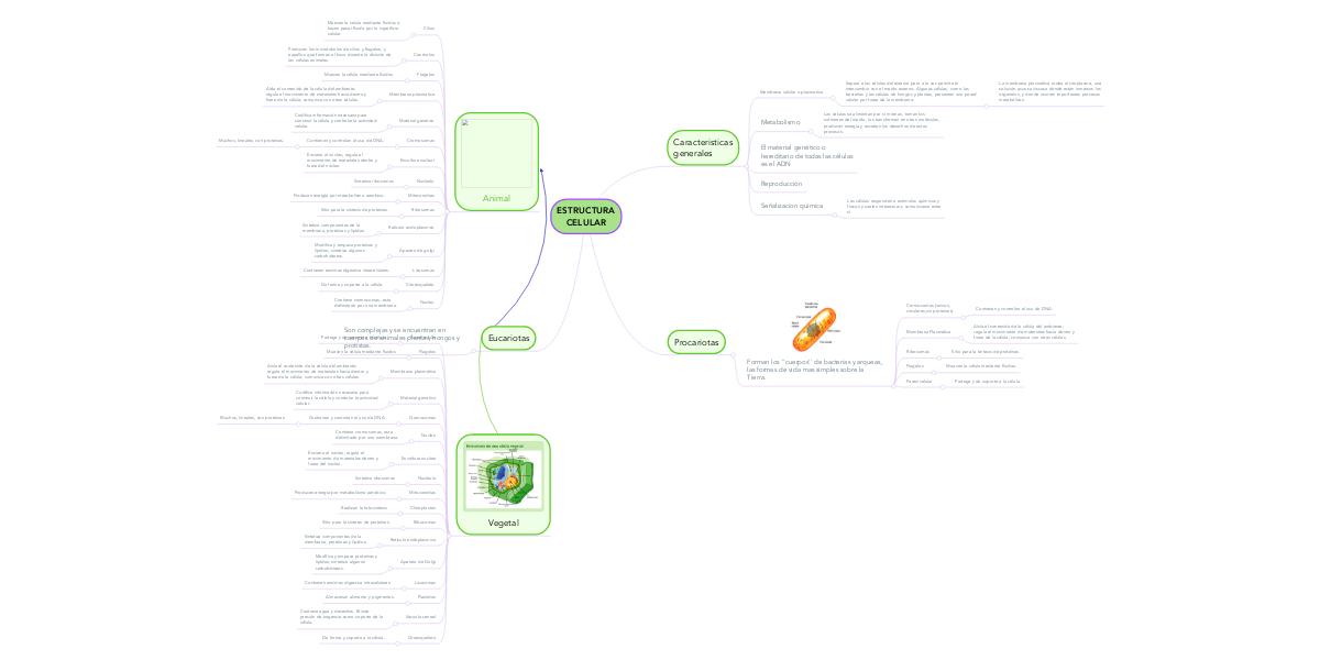 Estructura Celular Mindmeister Mapa Mental