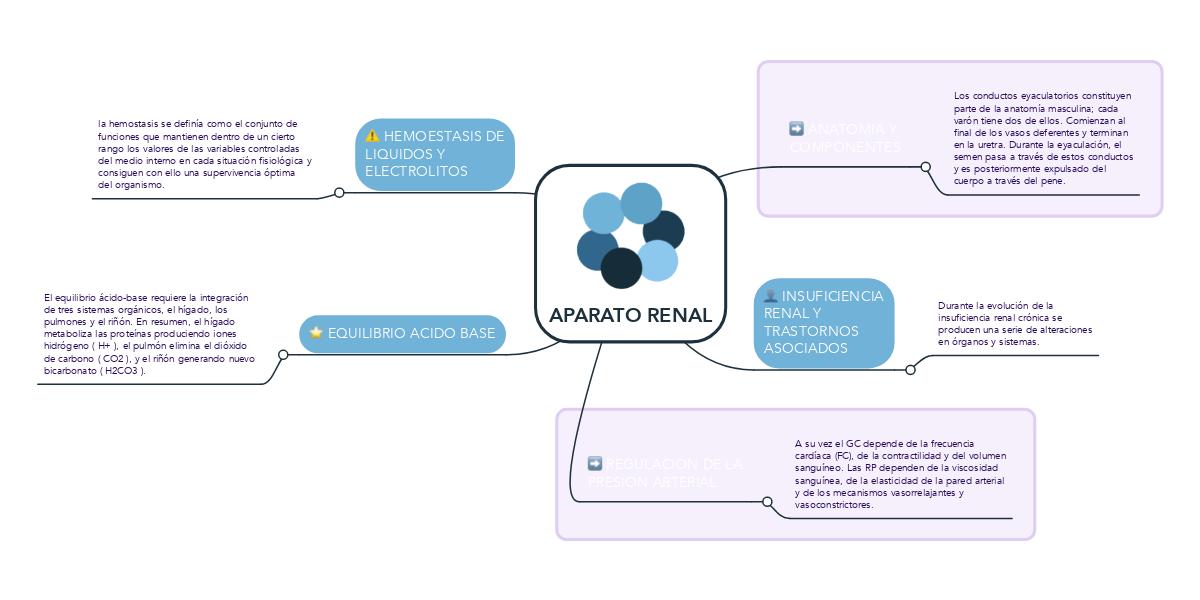 APARATO RENAL (Ejemplo) - MindMeister