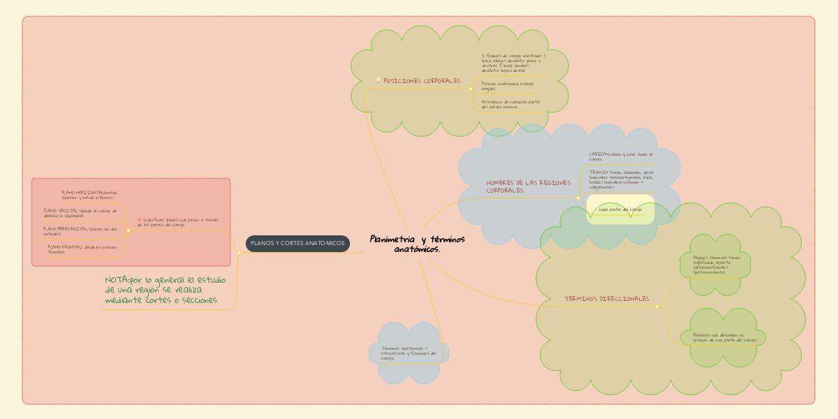 Planimetria y términos anatómicos. (Ejemplo) - MindMeister