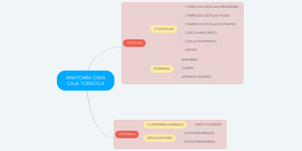 ANATOMÍA ÓSEA CAJA TORÁCICA (Example) - MindMeister