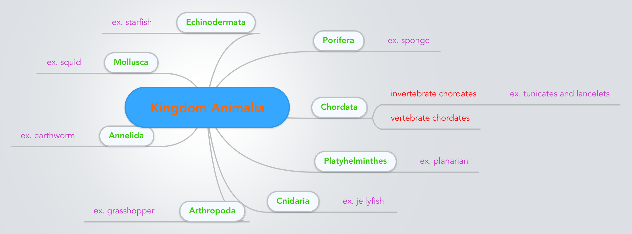 Image of: Living Organisms Mindmeister Kingdom Animalia Mindmeister Mind Map