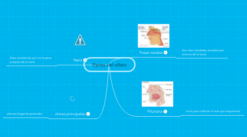 Mind Map: Partes del olfato