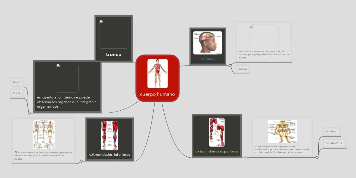 cuerpo humano (Example) - MindMeister