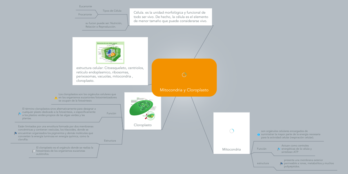 Mitocondria Y Cloroplasto Mindmeister Mind Map