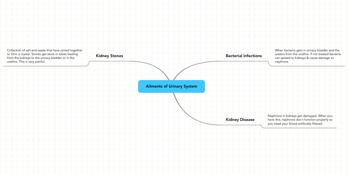 Ailments Of Urinary System Mindmeister Mind Map