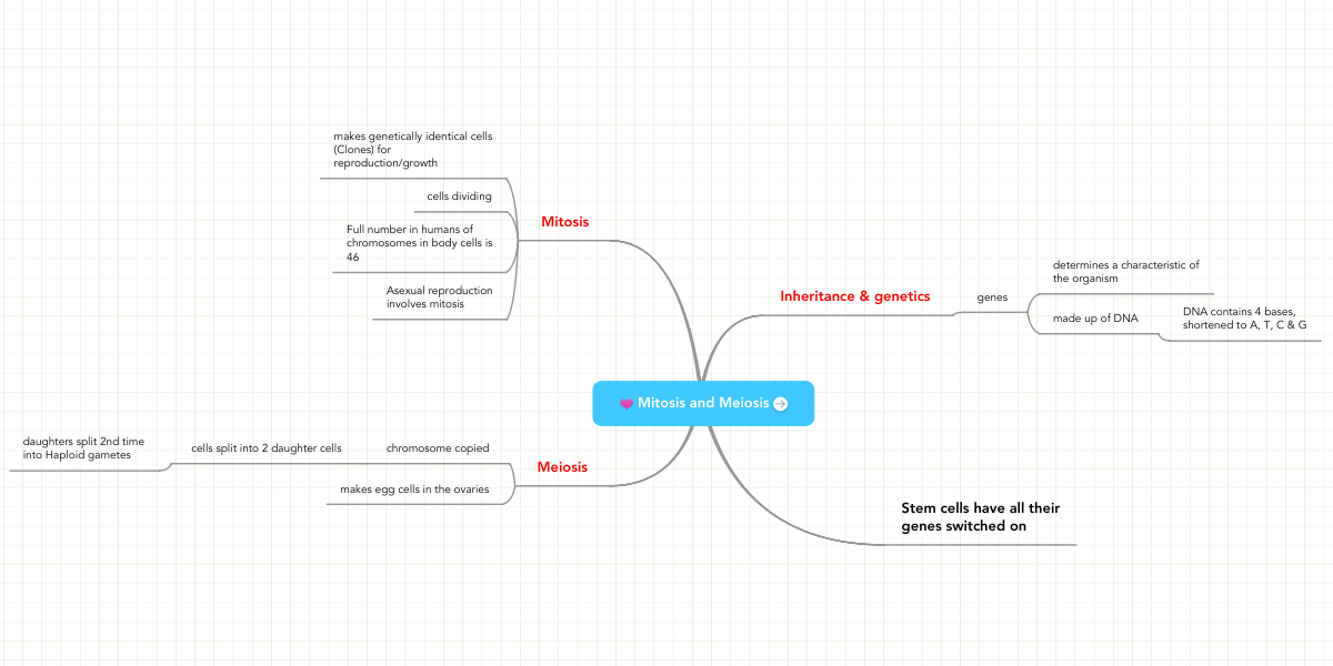 Mitosis And Meiosis Mindmeister Mind Map