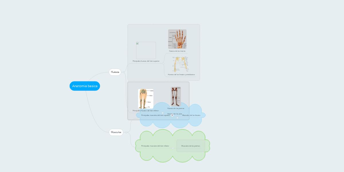 Anatomia basica (Example) - MindMeister