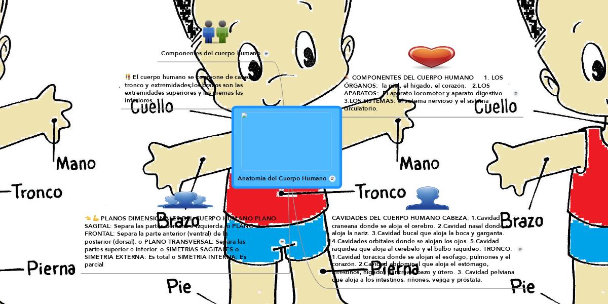 Anatomia del Cuerpo Humano (Example) - MindMeister