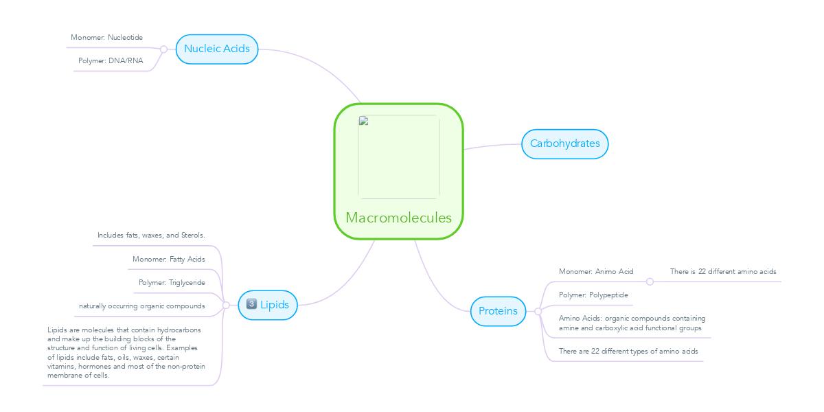 Macromolecules Example Mindmeister