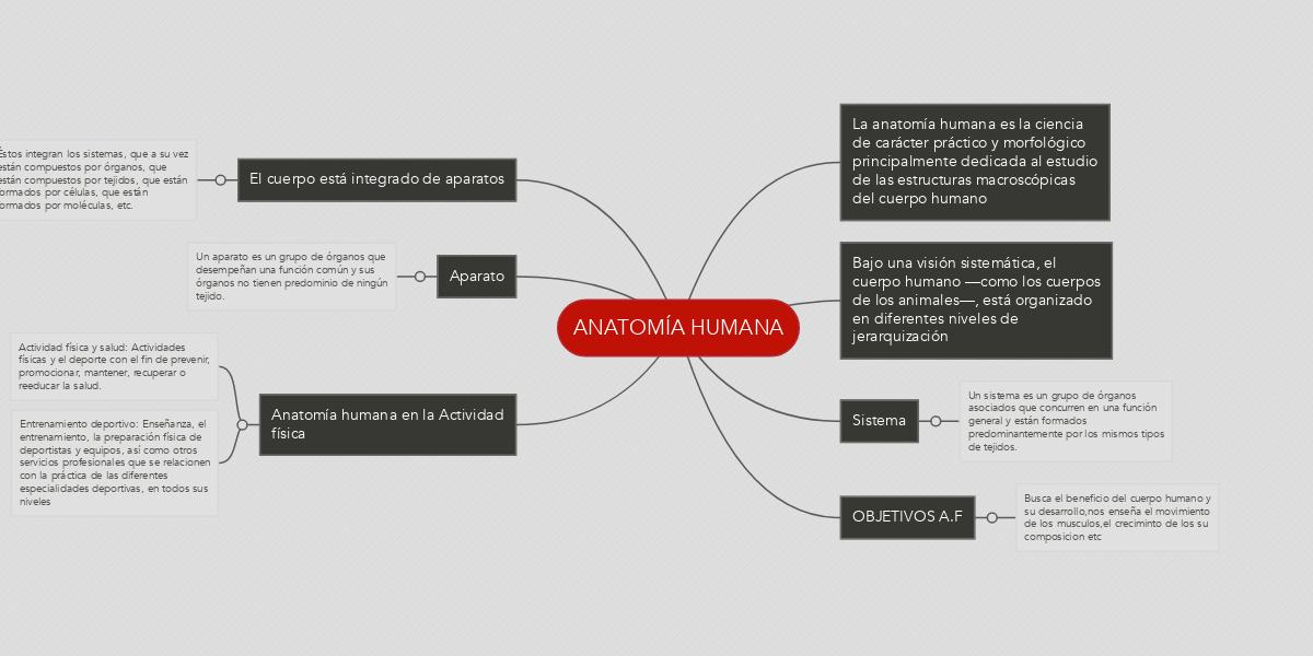 Excelente Anatomía Humana Práctica Festooning - Anatomía de Las ...