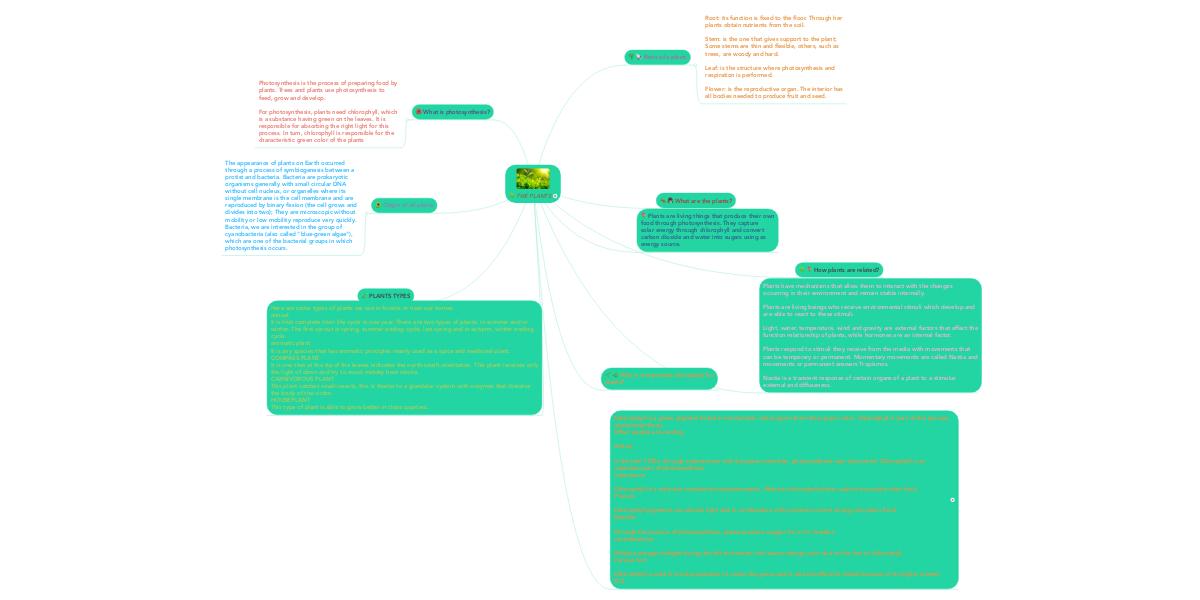 THE PLANTS   MindMeister Mind Map