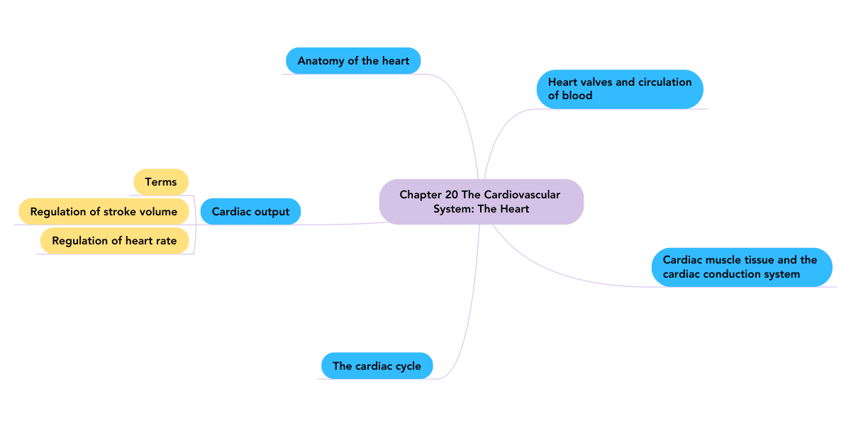 Chapter 20 The Cardiovascular System: The Heart (Example) - MindMeister