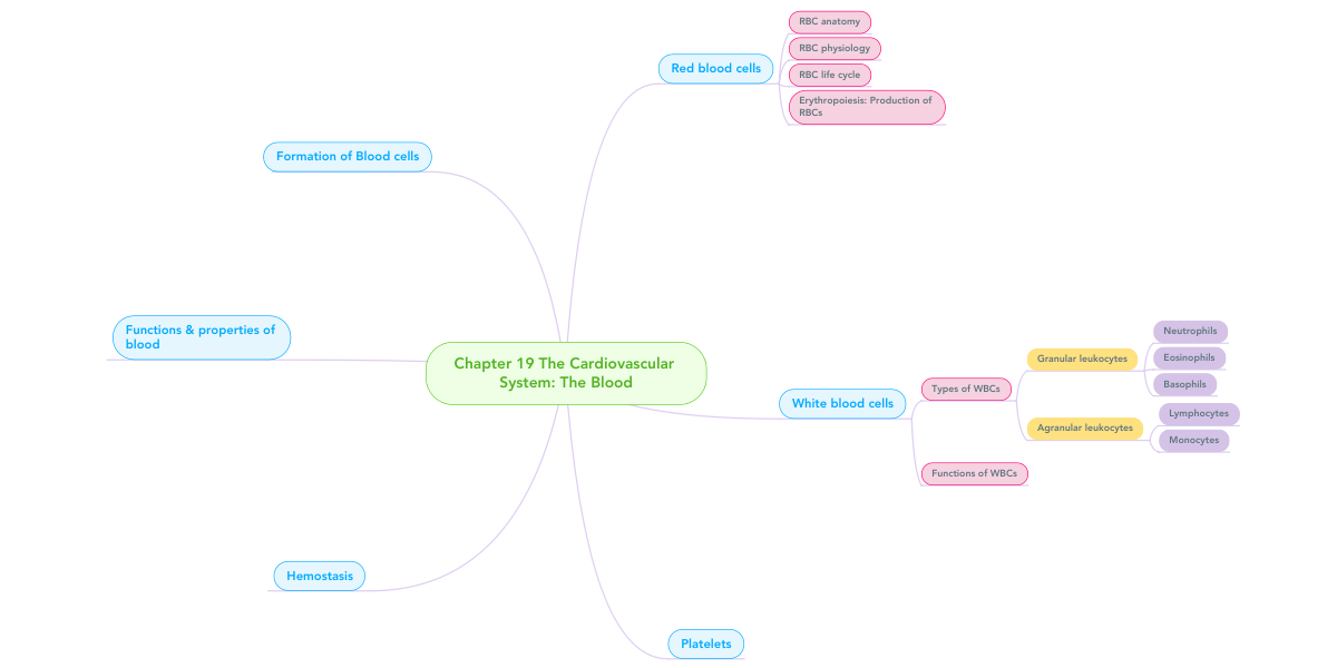 Chapter 19 The Cardiovascular System The Blood Mindmeister Mind Map