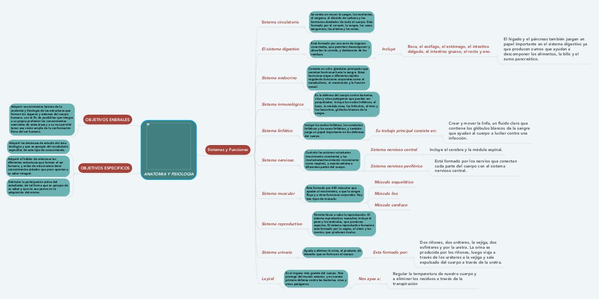 ANATOMIA Y FISIOLOGIA (Example) - MindMeister