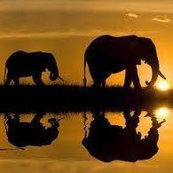 Elefantes en el ocaso