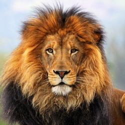 Animal 118 20120518 1511321022