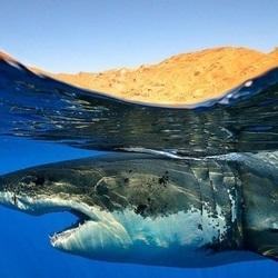 Sharks underwater 1920x1200 40164.jpg