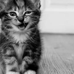 Graciosos descargar fondos de pantalla gatos divertidos hd widescreen gratis 1241607
