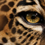 Jaguar wallpaper 8