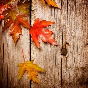 Autumn leaves autumn on tree