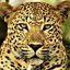 Leopardo 185140 opt