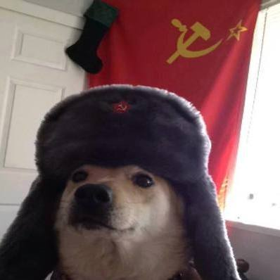 Commie shiba