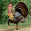 Sam turkey