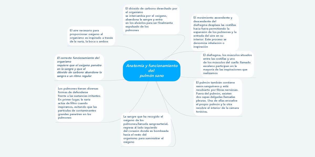 Anatomía y funcionamiento del pulmón sano (Exemple) - MindMeister