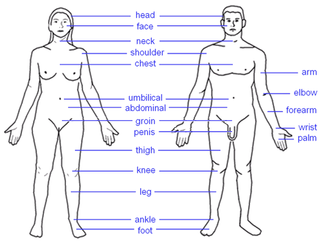 HUMAN BODY PARTS (Exemple) - MindMeister