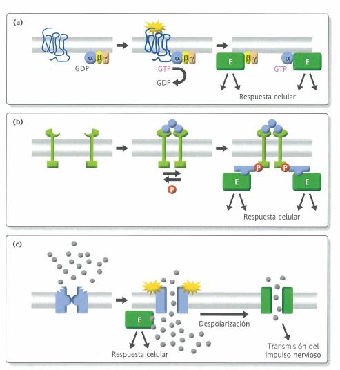 Módulo 2 (parte 1) Biología molecular, celular y ... (Ejemplo ...