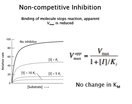 L11 Wk6 Enzyme Catalysis Example Mindmeister
