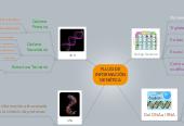 Mind map: FLUJO DEINFORMACIÓNGENÉTICA