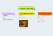 Mind map: BIOMAS TERRESTRES