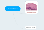 Mind map: Human Tissue