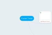 Mind map: Human Tissue