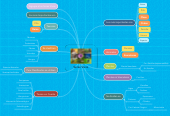 Mind map: Seres Vivos