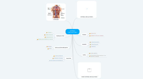 Mind Map: SISTEMA CIRCULATORIO