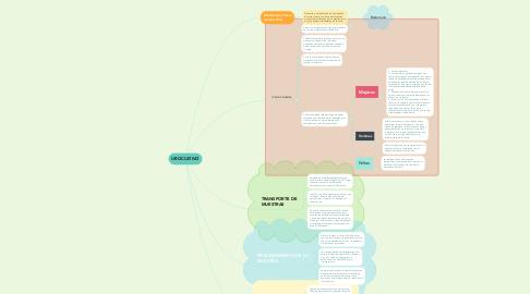 Mind Map: UROCULTIVO