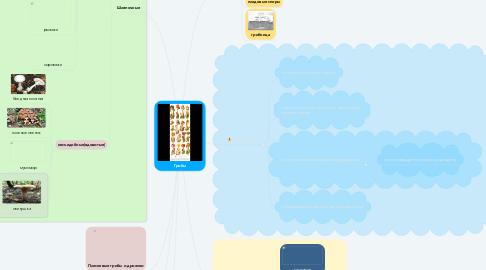 Mind Map: Грибы
