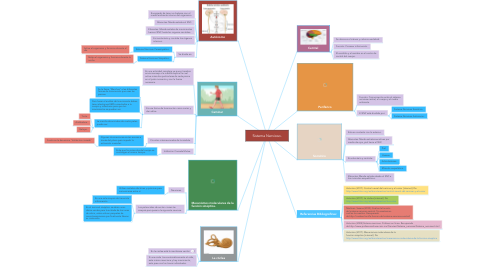 Mind Map: Sistema Nervioso.