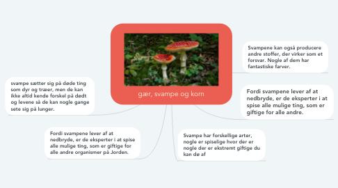 Mind Map: gær, svampe og korn