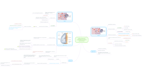 Mind Map: embryologische ontwikkeling week 4 postmenses