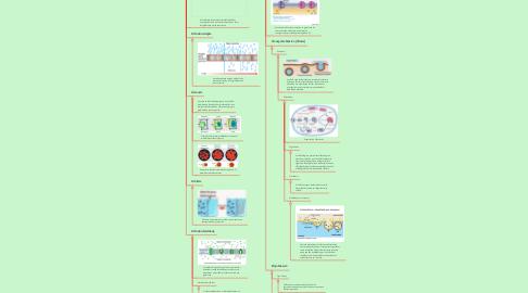 Mind Map: Tipos de transporte de celular