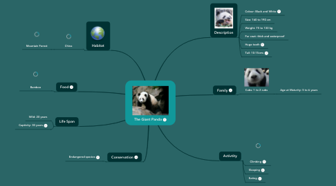 Mind Map: The Giant Panda
