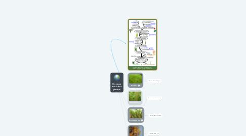 Mind Map: Processo Evolutivo Plantas