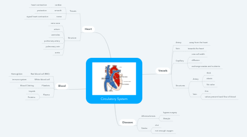 Mind Map: Circulatory System