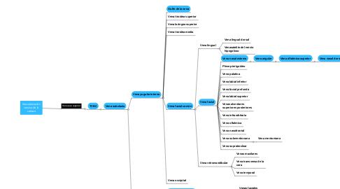Mind Map: Corriente filosofica